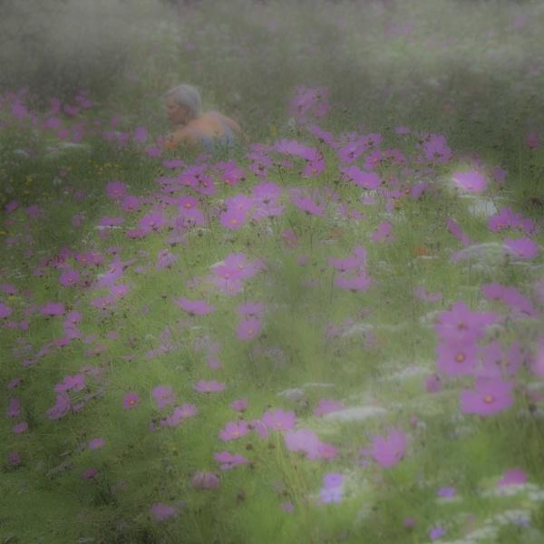 Summer meadow by judidicks