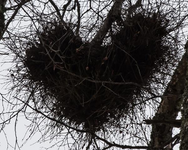 My Valentine by jaktis