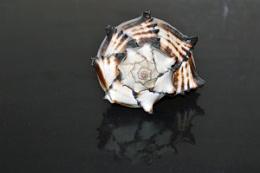 The snail's house