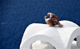 Romance in Santorini.