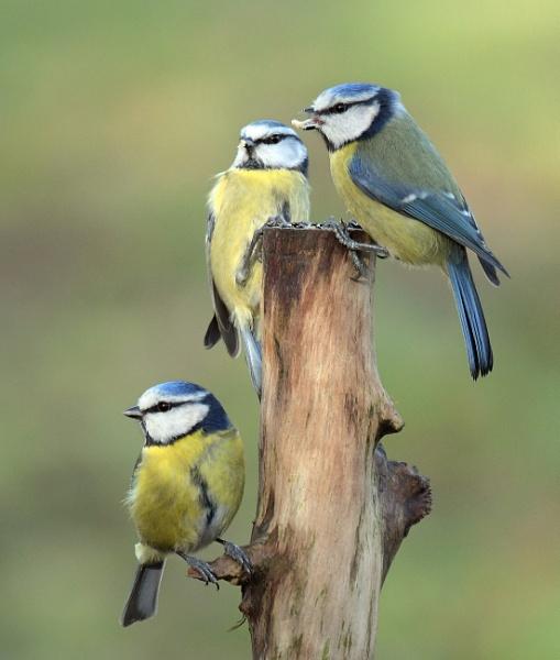 The Three Amigos by Holmewood