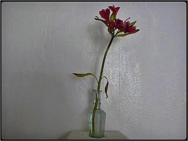 one flower by FabioKeiner