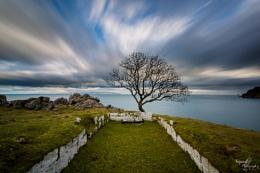The Murlough Tree