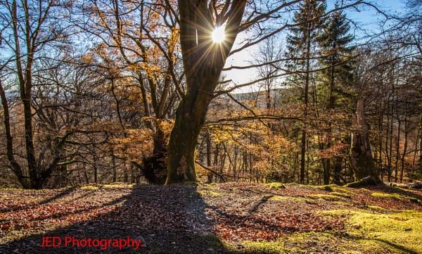 Backlit tree by Jedross