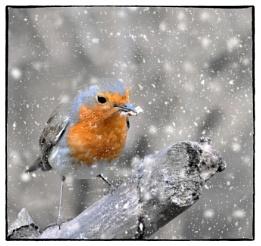 """Winter Feeding""."