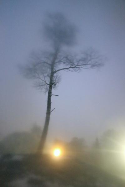 Night tree by Zenonas
