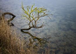 Lichen reflection