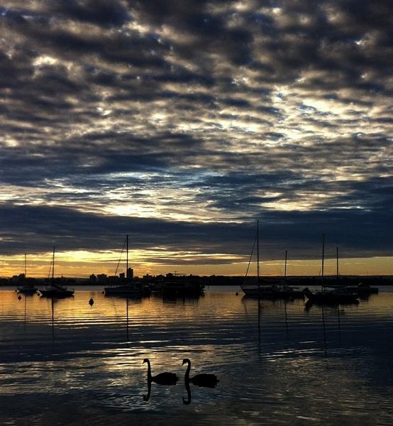 Matilda Bay Swans by optimist950