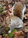 Kyoto garden squirrel by CarolG