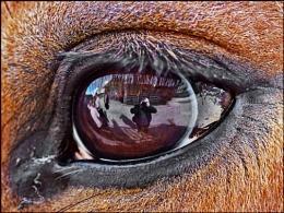 I saw Eye, and Eye saw Me
