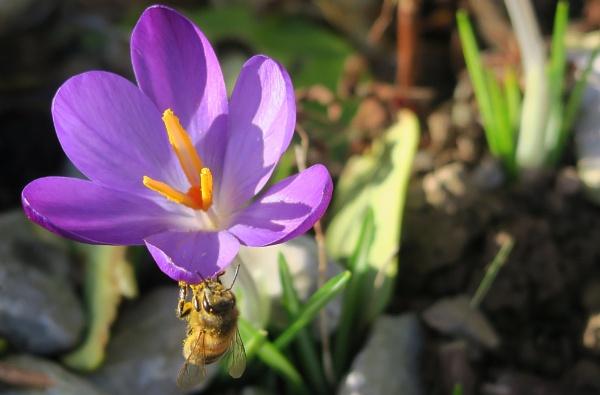 Bee in her Bonnet! by Silverzone
