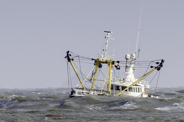 Sea Fury by gerryg