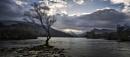 Llyn Padarn Tree by Tandberg
