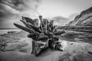 Tree stump on the beach by jonkennard