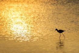 Feeding at sunset