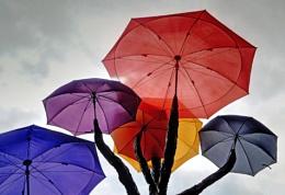 Photo : Any Umbrella any umbrella