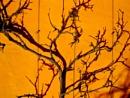 Orange and black by Drighlynne