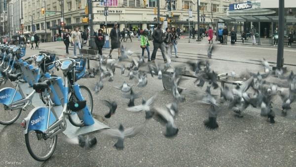 Pigeons by Swarnadip