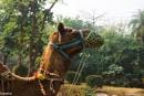 Camel by Swarnadip