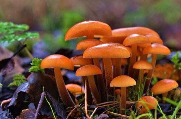 Fungus by georgiepoolie