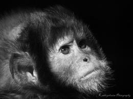 Through the seasons with Wildlife Photography World Magazine.