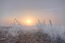Fog and Frost Sunrise by carper123