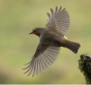 In full flight by Holmewood