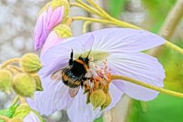 Bumble Bee.