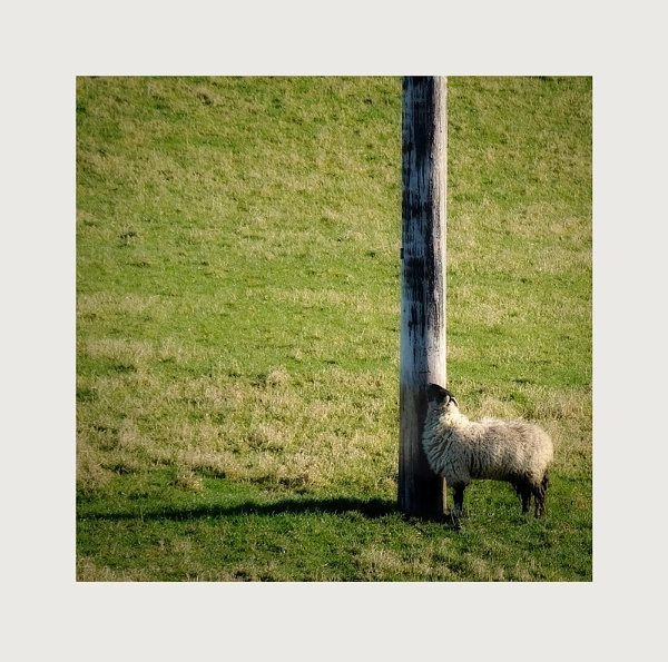 composition with one sheep #2 / Saturday shadow by whatriveristhis