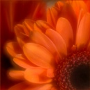 Orange 2 by taggart