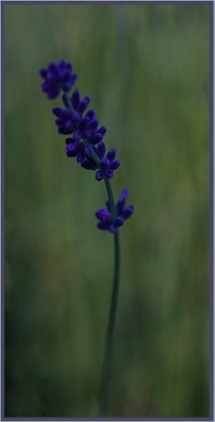 blau by RichardNiglas