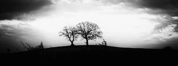 trees by mogobiker