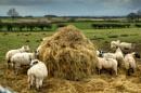 Shredded wheat by BillRookery