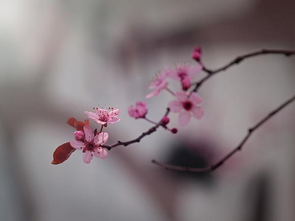 morning by LaoCe