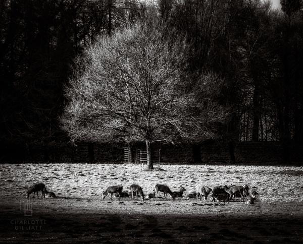 Deer Park by CVG167