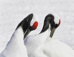 Snow cranes