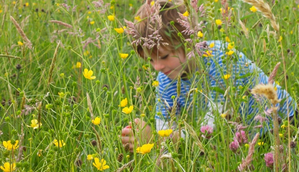 Summer Meadow Set - Entomologists of the Future ... by SocksAndStuff