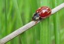 Ladybird Puzzle ... by SocksAndStuff
