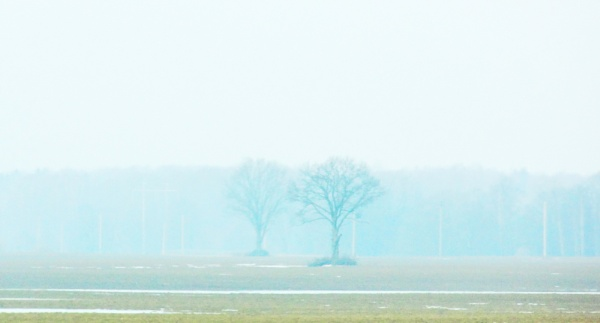 Neighbour trees in the blue fog by SauliusR
