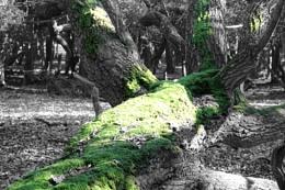 Winter Moss Tree