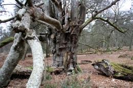 Winter Funghi Tree