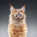 Garfield by DeLone