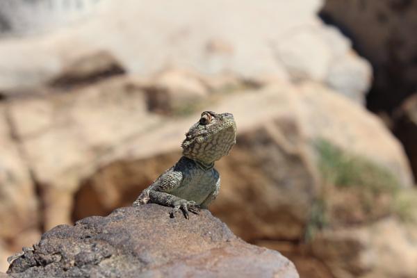 Posing lizard by Beth22