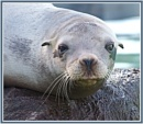 Seal Pup by PhilT2