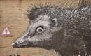 """Hedgehogging it!"" by Chinga"