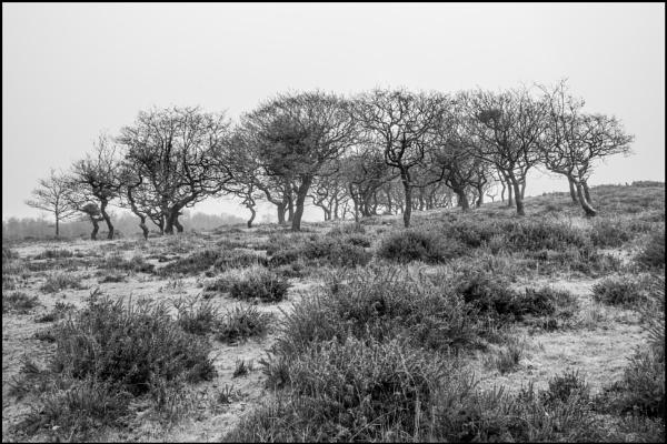 Near Dead Woman\'s Ditch by bwlchmawr