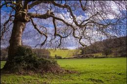 Landscape Near Dunster