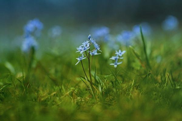 Blue by Ella1