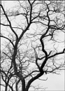Branches by taggart