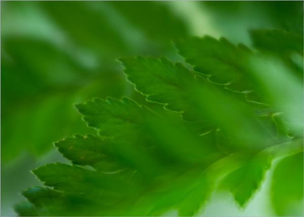 Ferns by taggart